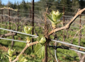 Some buds hanging out at the vineyard.