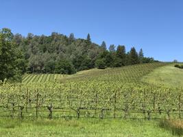 Lovely vineyard.
