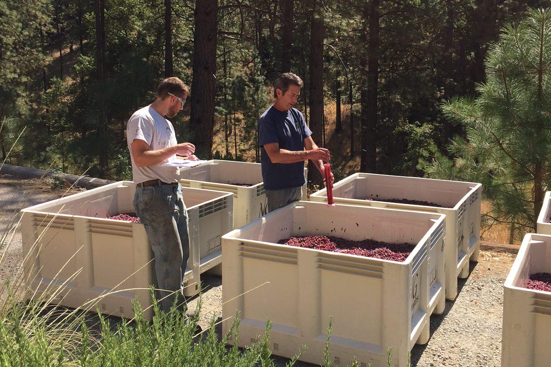 Winemaking Process 1